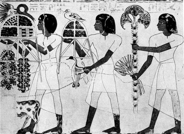 42. Слуги Себехотепа. Роспись из гробницы Себехотепа, XVII династия. Фивы. Короткие парики, туники с рукавами из легкой белой льняной ткани, набедренная повязка.